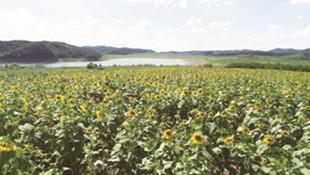 东洲区保护大伙房水源地这些年:景儿美了 村民幸福指数蹭蹭涨