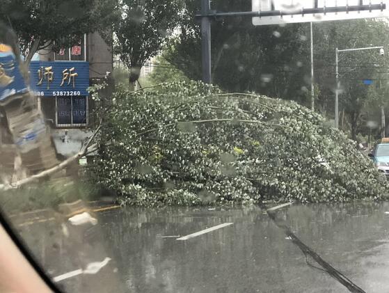 风雨结伴来我市捣乱半小时 树被刮倒 小凉快被吹歪