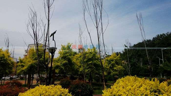 """【接续】顺城区高山社区休闲园内""""冬眠""""树木被清走"""