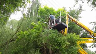 """供电和园林部门为树木""""剃头"""" 消除高压线下安全隐患"""