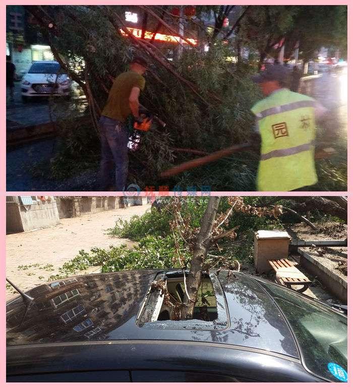 25日傍晚抚顺狂风骤雨   全市大约有近千棵大小树木倒伏