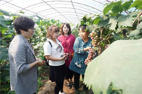 为期一个月的顺城区金秋采摘旅游节开始啦!水果、农产品,三个景区免费开放……