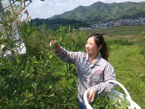 自己能拼能干 好政策加持助力 抚顺县峡河乡妇女养七彩柞蚕带头致富