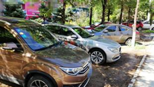 私家车、大铲车、校车…… 绿化带成了停车场 花草遭殃