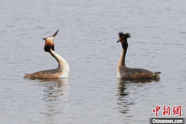 从生态遭破坏到候鸟栖息 抚顺社河国家湿地公园的蜕变