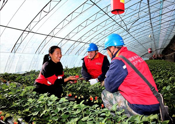 供电红马甲暖心助农 农户笑看草莓红