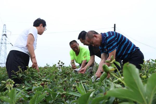 科技解困护航 药农中药材种植事业蒸蒸日上
