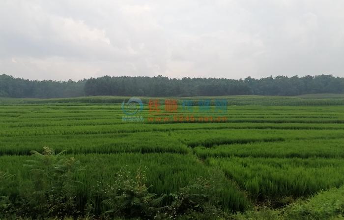 """抚顺市防止耕地""""非粮化"""" 粮食产量稳定在80万吨以上"""
