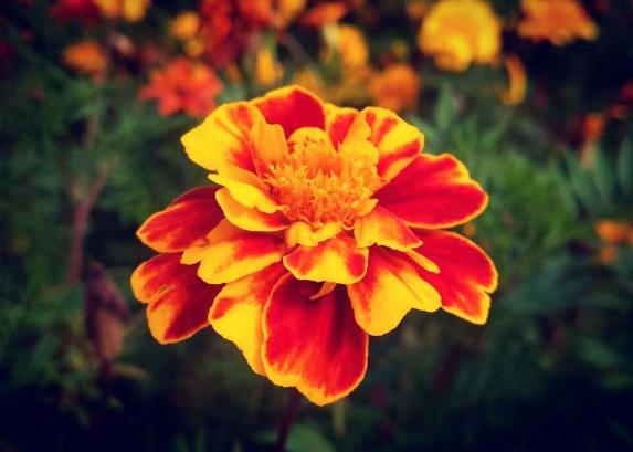 花儿的秋日私语