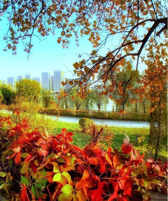 十里滨水公园:秋叶绚烂