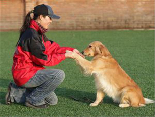 五项训练打造乖乖犬