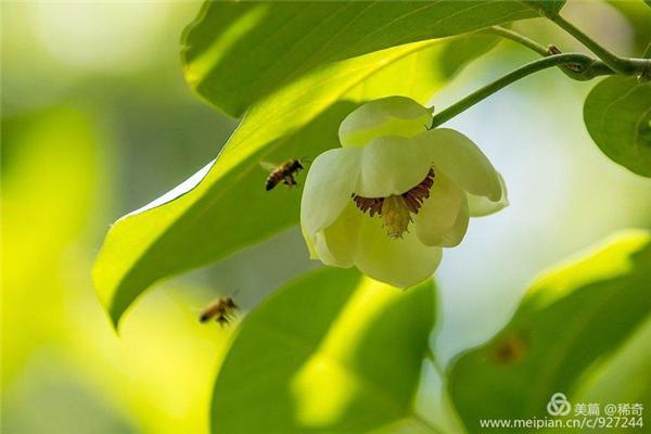 拍出美丽花朵 简单八招即可